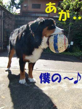 あがががが。僕のボール♪
