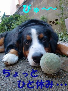 ボロボロテニスボール~♪