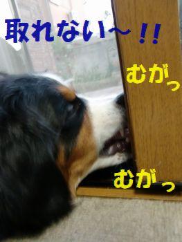 ここにあるんだってば~!!