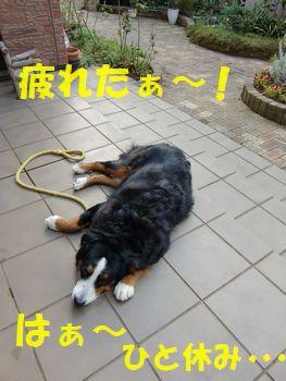 疲れたからゴロンしよ。