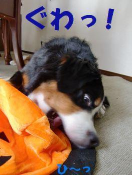 もう!このオレンジ邪魔~!!