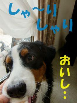 お~いし~!ナシ!!