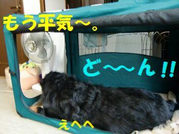 ここで寝っ転がれるよ~!
