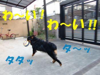 朝のボール遊び楽し~!!