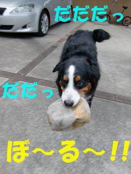 取りっこしよ~!!