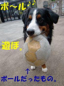 ボロだけどボールだもん。