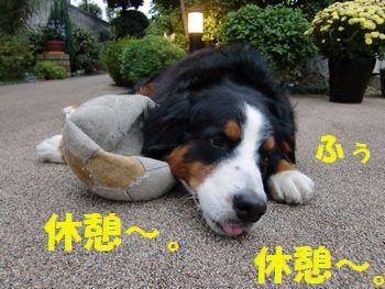 楽しいけど疲れちゃう・・・。