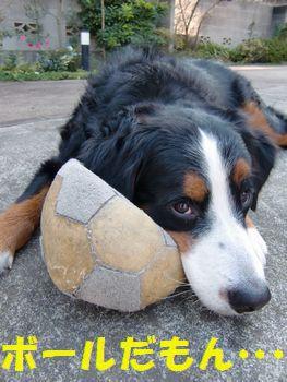 どう見たってボール!!