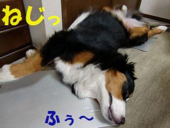 もうひと眠り・・・