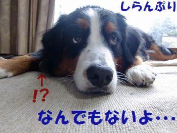知らないって~!!