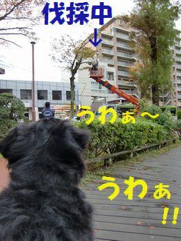 木が落ちてくる~!!