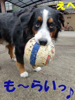 僕のボール、も~らいっ♪