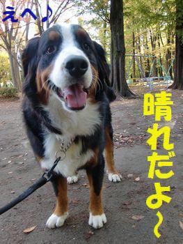 はれ~!かいせ~!!お散歩日和~♪