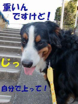 ちゃんと歩いて!!