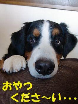 おねがいしま~す!
