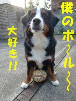 僕のマイボール♪