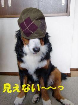 やっぱりこの帽子ヤ~ッ!!
