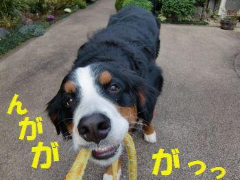 おひゃんぽいくの~!?