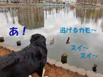 ど、どこ行くの~!?