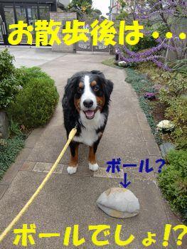 お散歩後もも~っと遊ぼう~♪