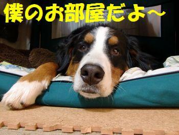 ココで寝るの・・・。