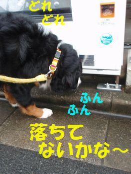 100円t玉~!いますか~!?