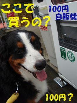 100円玉だね~。