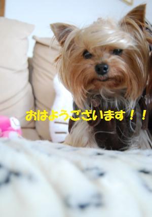 15302_20081111123737.jpg