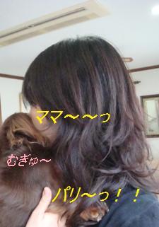 52-5-3_20081202094605.jpg