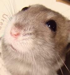 hamster268-.jpg