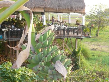 青いバナナ桟敷レストラン