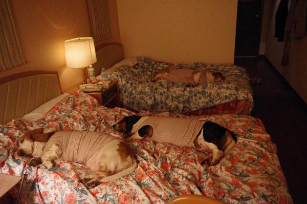 おねんねの三姉妹