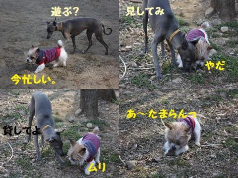 2009-04-03_20090407001040.jpg