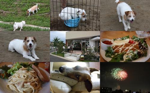 2009-07-21.jpg
