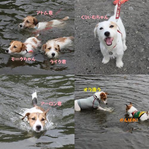 2009-08-03_20090806022027.jpg