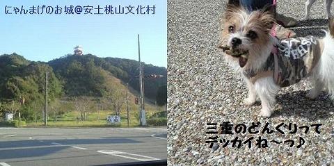 collage24.jpg