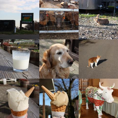 collage32.jpg