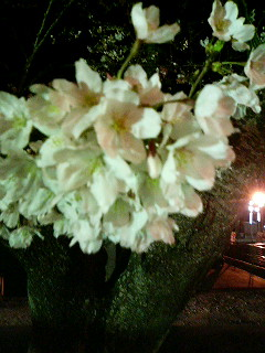 08年03月29日伊賀川 夜桜