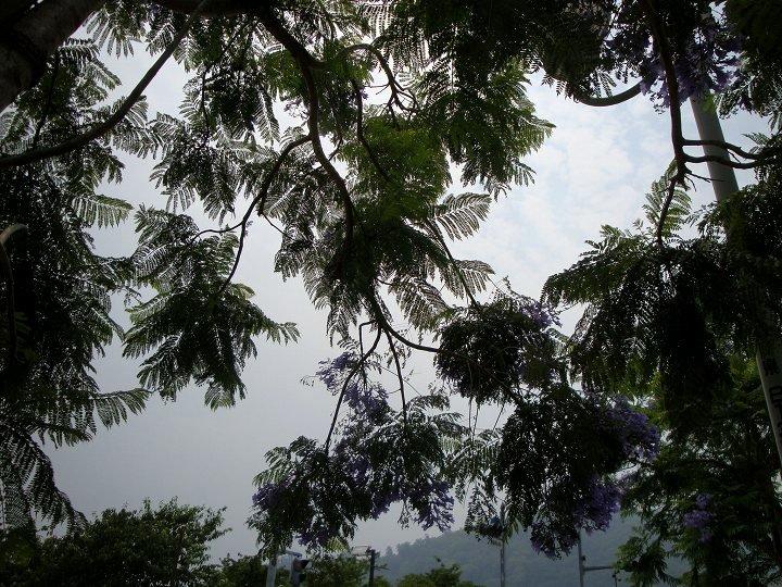 20090613-1.jpg