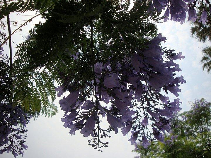 20090613-2.jpg