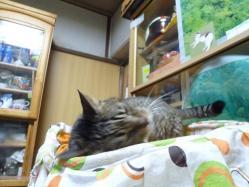 猫ブランケット4