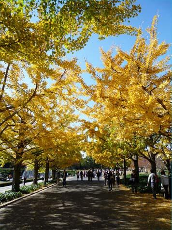 昭和公園05