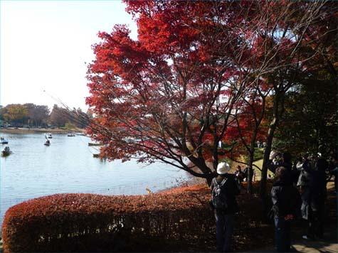 昭和公園10