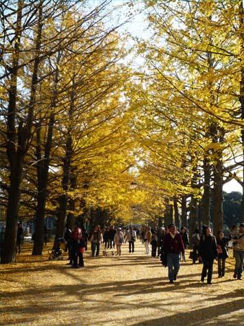昭和公園18