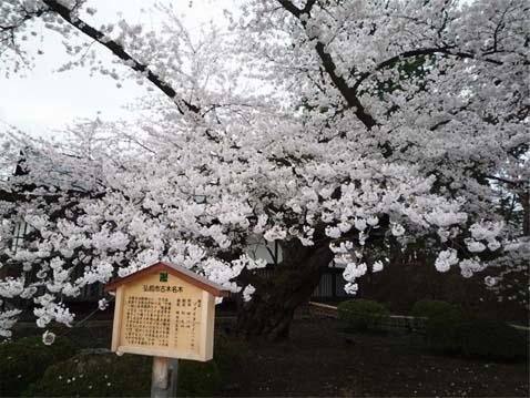 弘前公園08