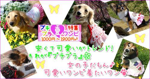 pchiprice_convert_20090513214108.jpg