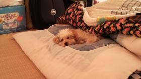 アーサーの寝坊