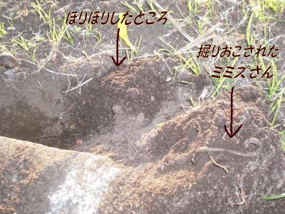 繝溘Α繧コ_convert_20081101220502