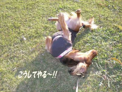 縺薙≧縺励※繧・k_convert_20081101220831