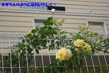 2008/06/14 その1